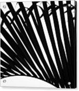 Black And White Palm Branch Acrylic Print
