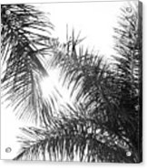 Black And White Palm Trees Acrylic Print