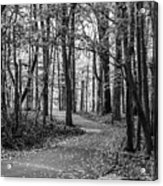 Black And White Path In Autumn  Acrylic Print