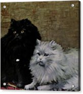 Black And White Persians Acrylic Print