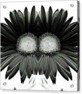 Black And White Petals Acrylic Print