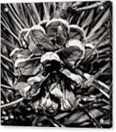 Black And White Pine Cone Wall Art Acrylic Print