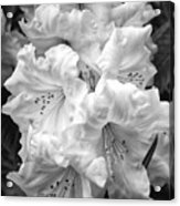 Black And White Rhododendron Acrylic Print