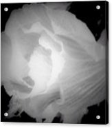 Black And White Rose Of Sharon Acrylic Print