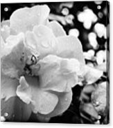 Black And White Rose Of Sharon Acrylic Print by Eva Thomas