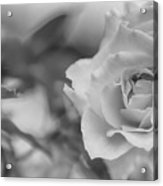 Black And White Rose Acrylic Print