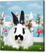 Black And White Spring Bunny Acrylic Print