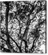 Black And White Tree 2 Acrylic Print