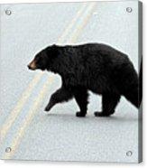Black Bear Crossing The Road  Acrylic Print