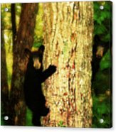 Black Bear Cubs Acrylic Print by Gray  Artus