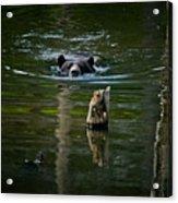 Black Bear Pictures 104 Acrylic Print
