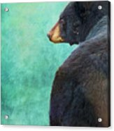 Black Bear's Bum Acrylic Print