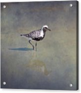 Black-bellied Plover By Darrell Hutto Acrylic Print