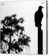 Black Bird Acrylic Print