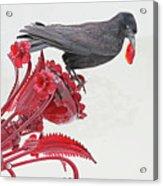 Black Bird Red Silicate Glass Flowers Gray Background 2 8282017  Acrylic Print