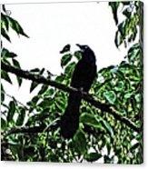Black Bird Sings Acrylic Print