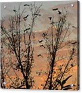 Black Birds At Sundown Acrylic Print