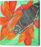Black Butterfly Acrylic Print