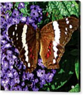 Black Butterfly On Heliotrope Acrylic Print