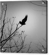 Black Buzzard 1 Acrylic Print