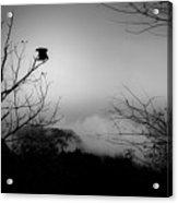 Black Buzzard 8 Acrylic Print