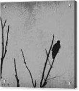 Black Buzzard Moon Acrylic Print