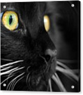 Black Cat 2 Acrylic Print by Craig Incardone