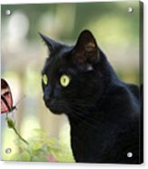 Black Cat And Butterfly Acrylic Print
