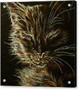 Black Cat Drawing Acrylic Print
