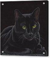 Black Cat - I'm Watching You Acrylic Print