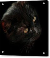 Black Cat Acrylic Print