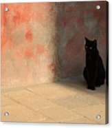 Black Cat On Burano Acrylic Print