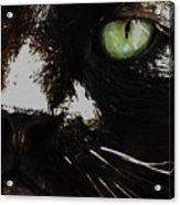 'black Cat' Acrylic Print