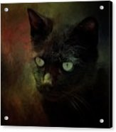 Black Cat Portrait Acrylic Print
