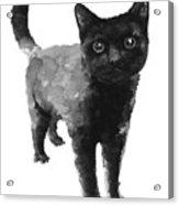 Black Cat Watercolor Painting  Acrylic Print