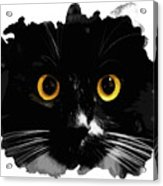 Black Cat, Yellow Eyes Acrylic Print