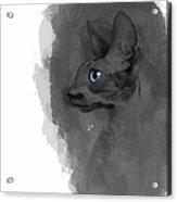 Black Cornish Rex No 04 Acrylic Print