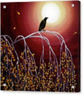 Black Crow On White Birch Branches Acrylic Print