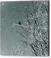 Black Crow White Snow Acrylic Print