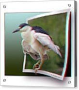 Black Crowned Night Heron - Use Red-cyan 3d Glasses Acrylic Print