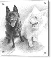 Black Dog White Dog Drawing Acrylic Print