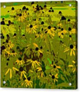 Black Eyed Susan Work Number 21 Acrylic Print