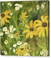 Black-eyed Susans In A Field Acrylic Print
