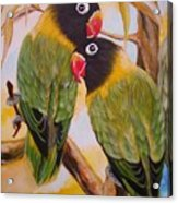 Black Faced Love Birds.  Chloe The Flying Lamb Productions  Acrylic Print