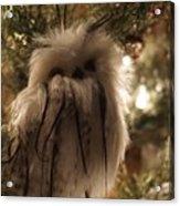 Black Feather Owl Acrylic Print