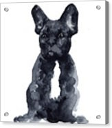 Black French Bulldog Watercolor Poster Acrylic Print