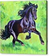 Black Friesian Horse Acrylic Print