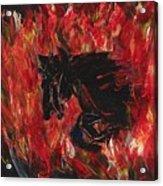 Black Fury Acrylic Print