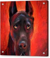 Black Great Dane Dog Painting Acrylic Print