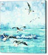 Black-headed Seagulls At Seven Seas Beach  Acrylic Print